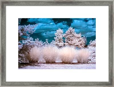 Infrared Bushes Framed Print
