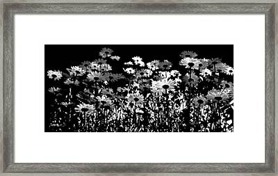 Infrared Daisies Framed Print by David Patterson