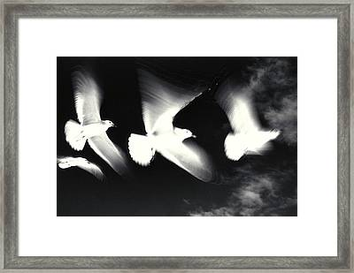 Infrared Gulls Framed Print by Jerry McElroy