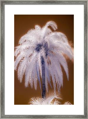 Infrared Palm Tree Framed Print