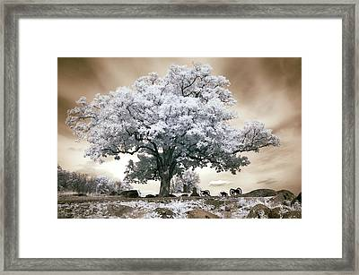 Infrared Tree On A Hill In Gettysburg Framed Print by Paul W Faust -  Impressions of Light