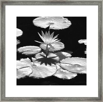 Infrared - Water Lily 02 Framed Print by Pamela Critchlow