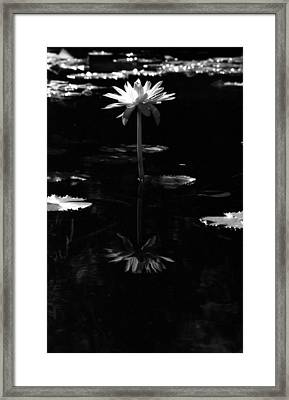 Infrared - Water Lily 03 Framed Print by Pamela Critchlow