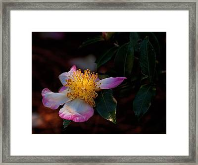 Framed Print featuring the photograph Ingenue by John Harding