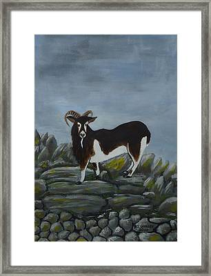 Inis Meain 4 Goat Framed Print by Roland LaVallee