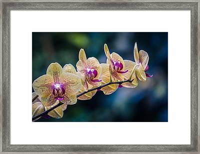 Inner Beauty Framed Print by Sara Frank