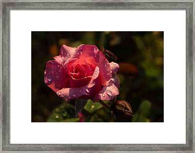 Inner Glow In Pink Framed Print by Georgia Mizuleva