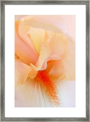 Framed Print featuring the photograph Inner Iris 1 Of 4 by Jana Russon