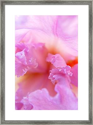 Framed Print featuring the photograph Inner Iris-2of4 by Jana Russon