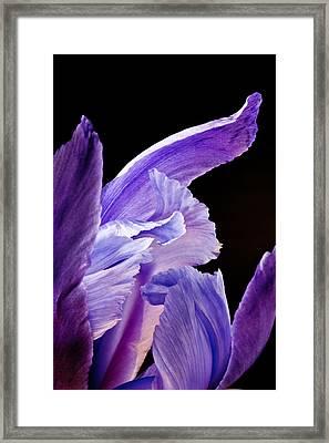 Inner Light 2012 Framed Print by Art Barker