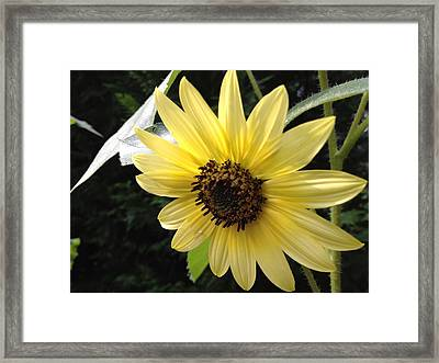 Framed Print featuring the photograph Inner Light by Alan Lakin