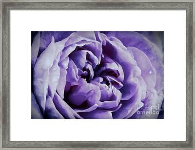 Lavender Motive Framed Print by Jean OKeeffe Macro Abundance Art