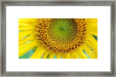 Inner Peace Forms Within This Sweet Yellow Sunflower Framed Print by Eunice Miller