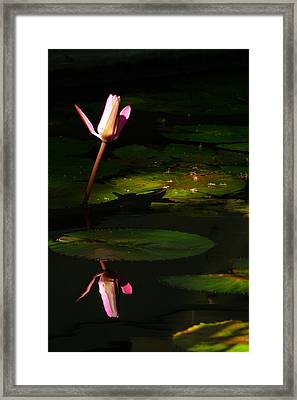 Framed Print featuring the photograph Inner Peace by Evelyn Tambour