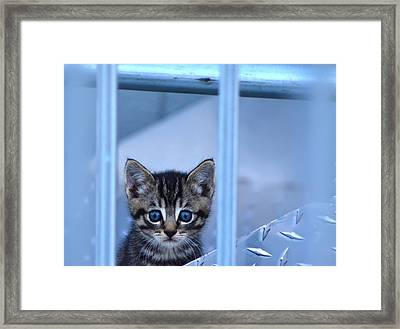 Innocence Framed Print by Camille Lopez
