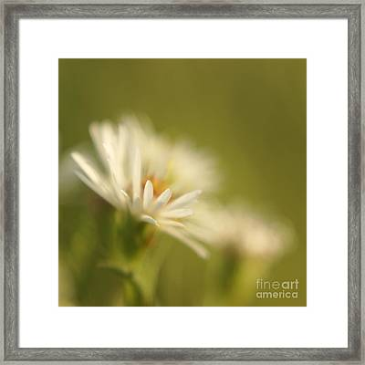 Innocence - Original Framed Print by Variance Collections