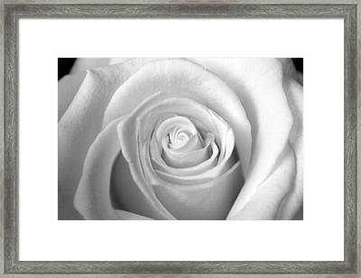 Innocence Framed Print by Silke Brubaker