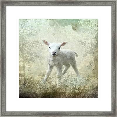 Innocent Framed Print