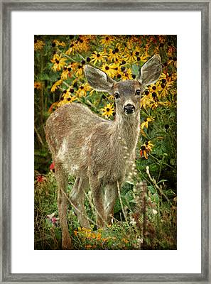 Framed Print featuring the photograph Innocent Fawn And Flowers by Peggy Collins