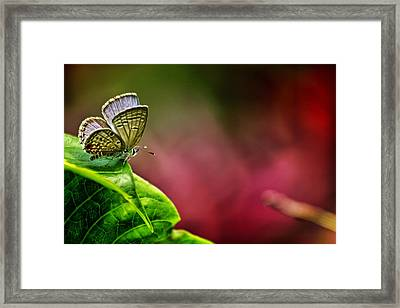 Innocent To This World Framed Print