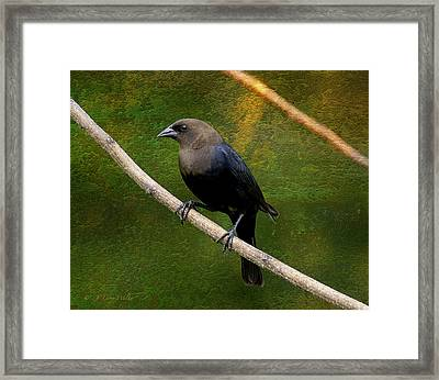 Framed Print featuring the digital art Inquisitive Cowbird by J Larry Walker