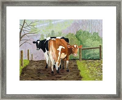 Inquisitive Cows Framed Print