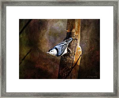 Framed Print featuring the digital art Inquisitive Nuthatch by J Larry Walker