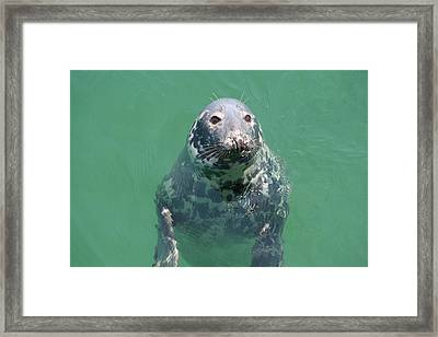 Inquisitive Seal Framed Print