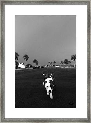 Inquisitive Framed Print by Thomas Leon