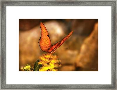 Insect - Butterfly - Just A Bit Of Orange  Framed Print by Mike Savad