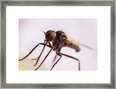 Insect Extreme Macro Fly With Pollen Framed Print by Mr Bennett Kent