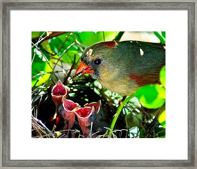 Insect For Diner Agaain Framed Print