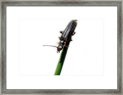 Insect On A Stick Looking Up Framed Print by Tommytechno Sweden