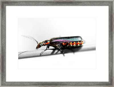 Insect On A Stick Framed Print by Tommytechno Sweden