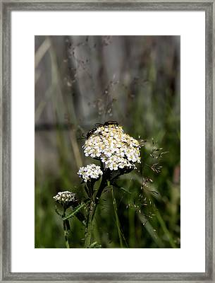 Framed Print featuring the photograph Insect On White Flower by Leif Sohlman