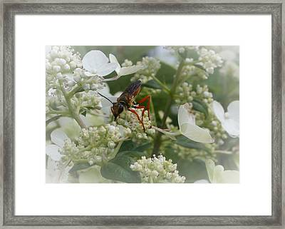 Insect On White Framed Print by Terry Atkins