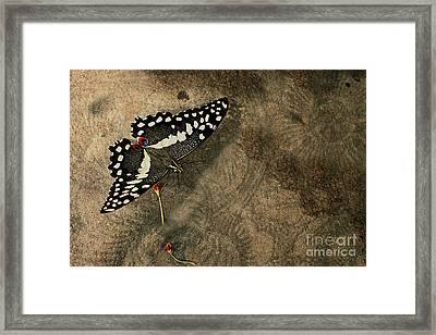 Insect Study Number 30 Framed Print by Floyd Menezes