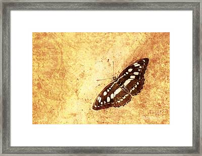 Insect Study Number 66 Framed Print by Floyd Menezes