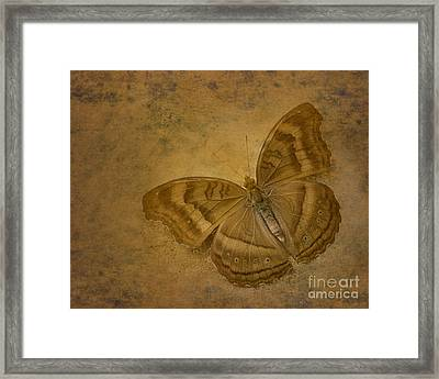 Insect Study Number 94 Framed Print by Floyd Menezes