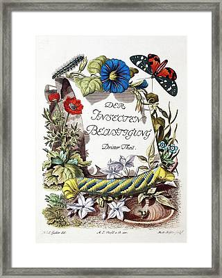 Insecten-belustigung Framed Print by Paul D Stewart