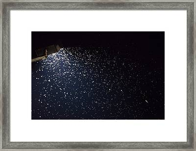 Insects Attracted To A Flood Light Framed Print
