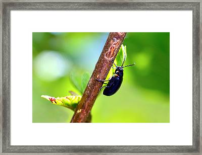 Insects In Nature On A Stick Framed Print by Tommytechno Sweden