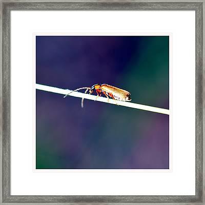Insekt On A Stick Framed Print by Tommytechno Sweden