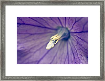 Inside A Balloon Framed Print by Priya Ghose
