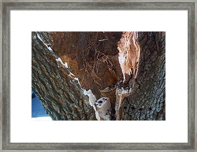Framed Print featuring the photograph Inside A Bradford Pear Tree by Emmy Marie Vickers