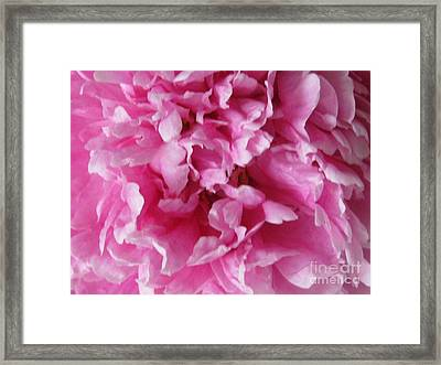 Framed Print featuring the photograph Inside A Pink Peony by Margaret Newcomb