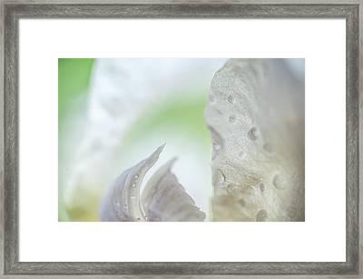 Inside. Iris Secrets Framed Print