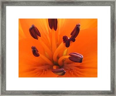 Inside The Bloom Framed Print