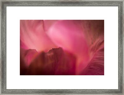 Framed Print featuring the photograph Inside The Flower by Jay Stockhaus