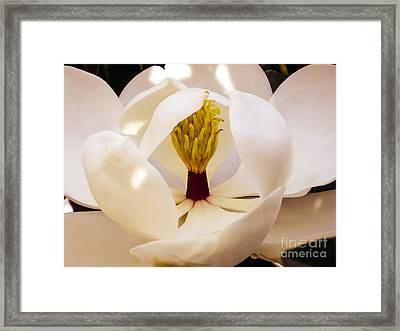 Inside The Magnolia Framed Print